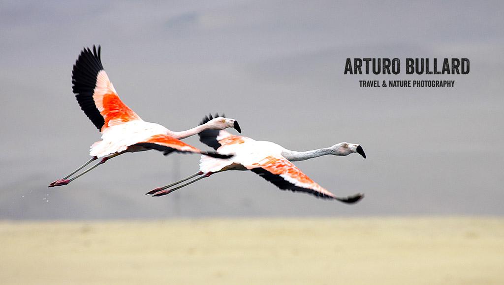 La Parihuana, San Martín y la Bandera del Perú. Que Tienen en Común?